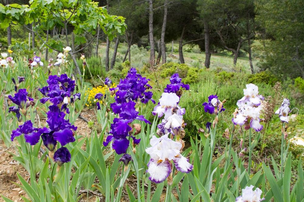019-iris